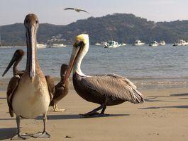 Birding 101 - Birding in Paradise
