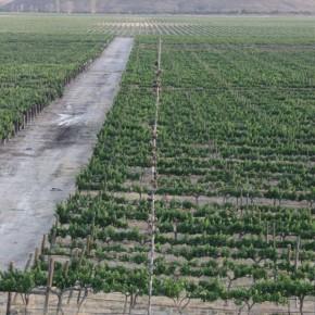 Casa Madero vineyard